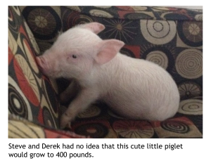 Image of Esther the Wonder Pig as a piglet