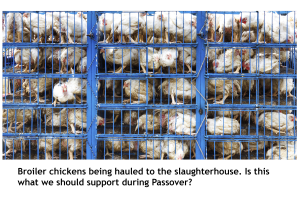 Chickens-Passover