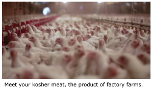 Kosher meat, with caption
